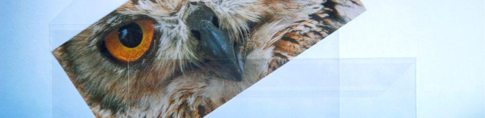 transparente briefumschläge - Sauerwald Medienverpackungen